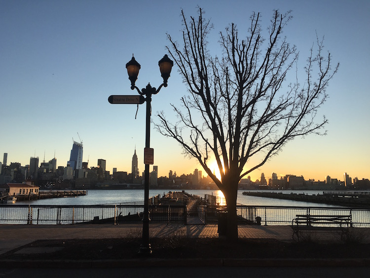 A tree in Hoboken with the sun rising over the Hudson River and NYC behind