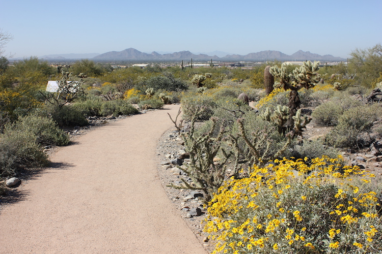 A desert path leading to far Arizona mountains