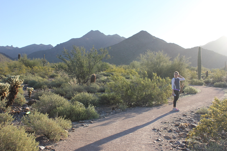 A hiking path leading through the desert toward the McDowell Mountains