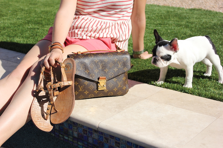 A french bulldog looking at a pair of Louis Vuitton sandals and a Louis Vuitton bag